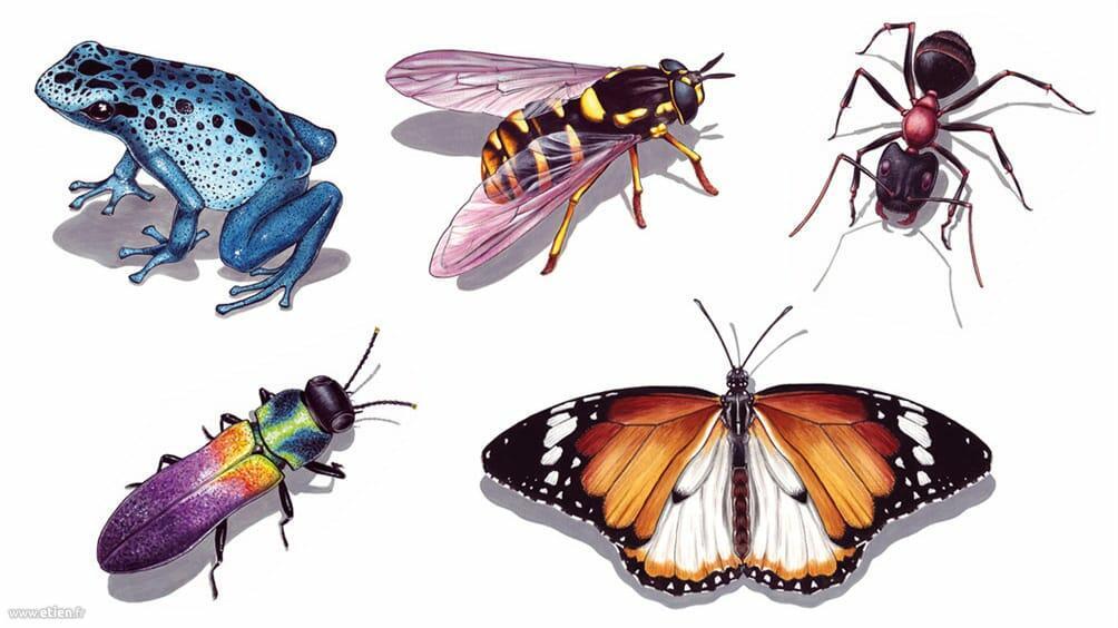 """Illustrations pour <a href=""""http://www.2alpes-snowpark.com/"""">Les 2 Alpes</a> - Impression sur bâches<br/> Acrylique sur papier A4 (chaque insecte)<br/> 2008"""