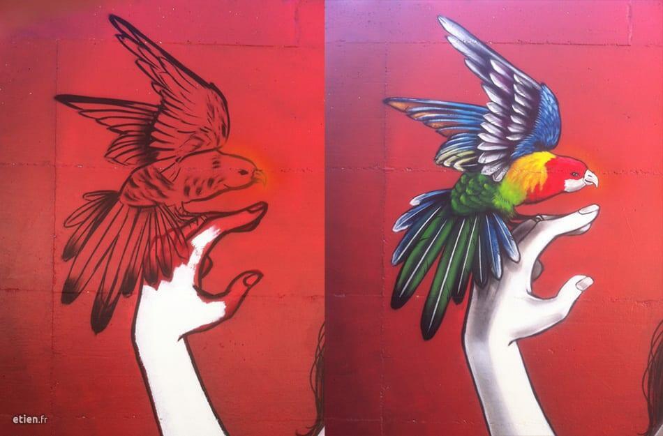 perroquet en cours