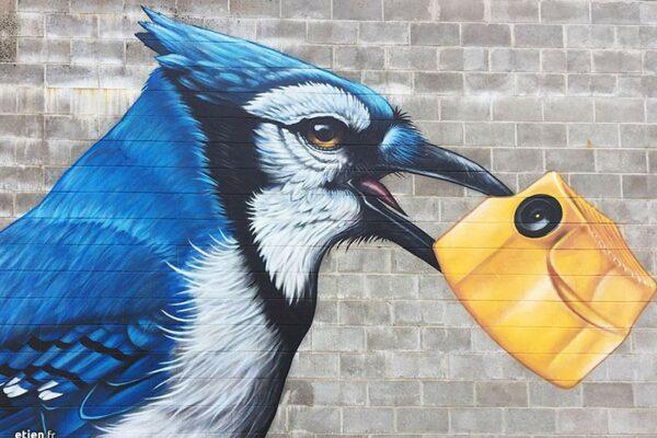 fresque-murale-geai-bleu-03