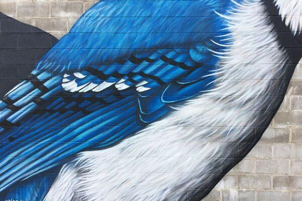 fresque-murale-geai-bleu-06